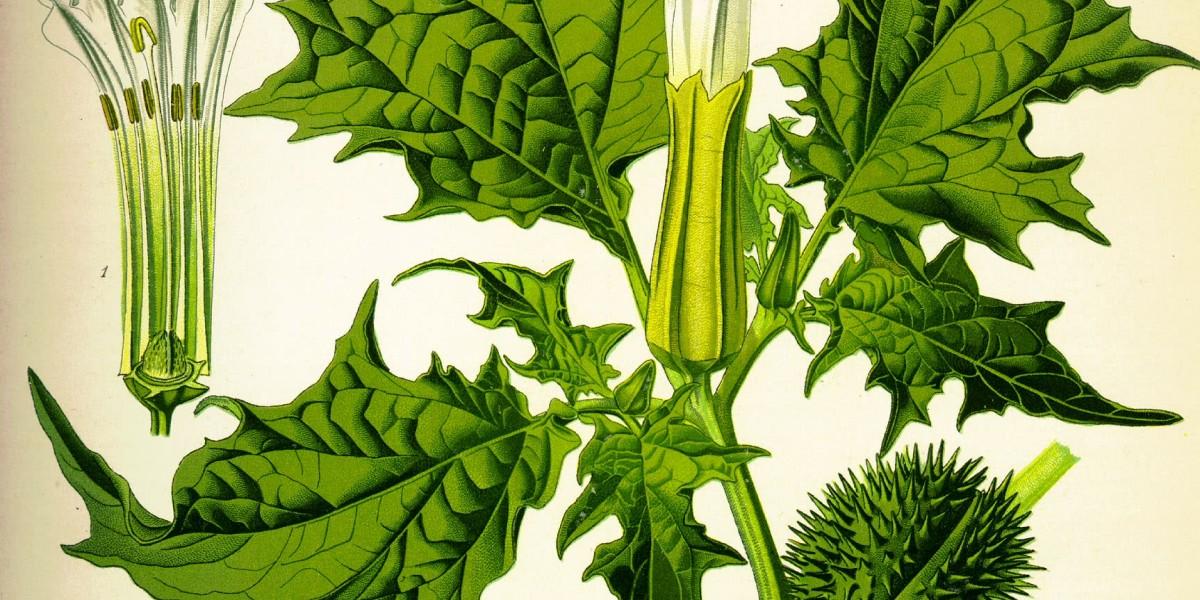 Qui a peur des plantes invasives ? Atelier de sociologie populaire des controverses
